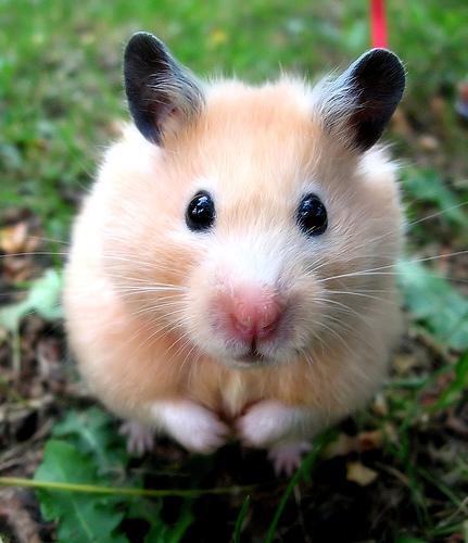 hamster21-1